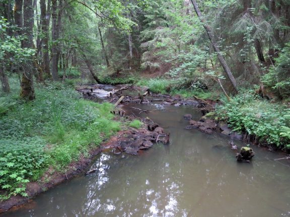 Fågelforsdammen i Skillingaryd, en nyckelbiotop utmed den gamla åfåran, del 3