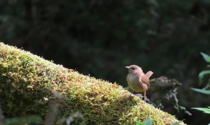 Fågelforsdammen i Skillingaryd, en nyckelbiotop utmed den gamla åfåran