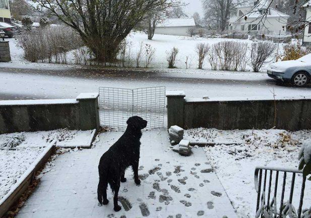 Första snön är här…