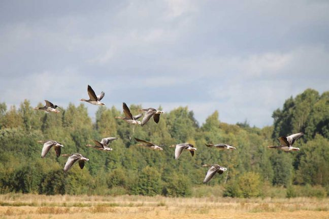 Tävlingsbild 8: Fågellivet vid Osudden