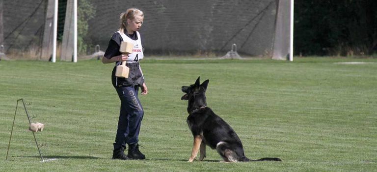 Arrangerar SM för schäferhundar