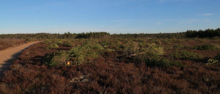Boglös 156 A ½ II, alldeles väster om Viltvattnet, öster om Boglösasjön