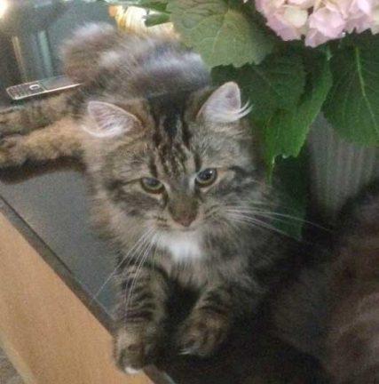 Katt saknas i Skillingaryd