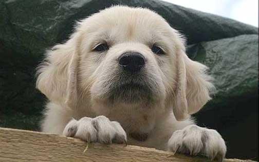 Hundfrågan 103: Sommarvärmen är här – även för hunden