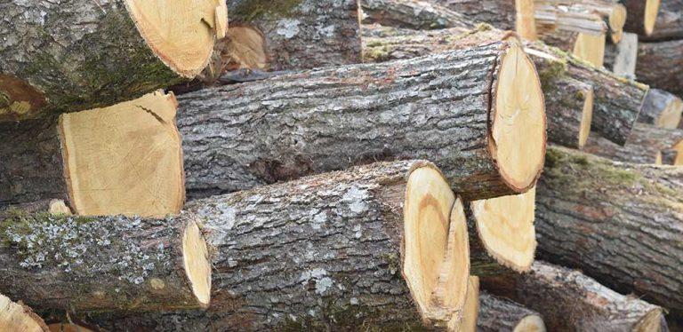 Fler frågar om skogsförsäkring