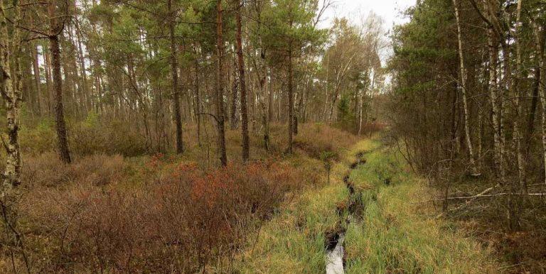 Häradsösjön, en vandring utmed Strandstigen inom Store mosse nationalpark