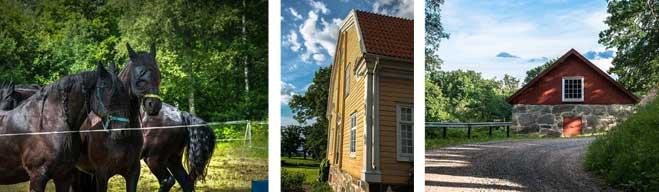 Sommartävlingen: Tio bilder av Krister