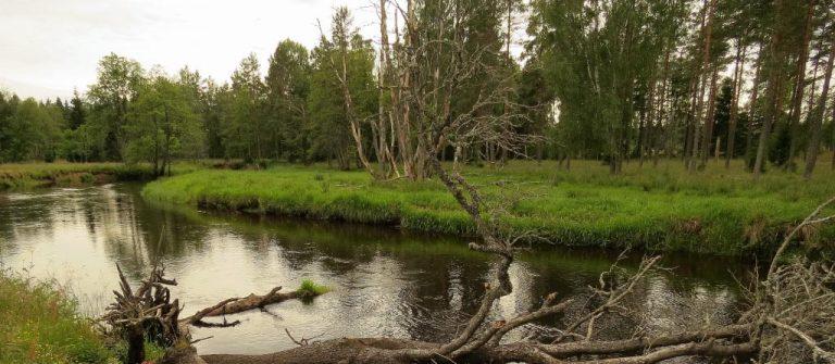 Lagans åängar och mader mellan Skillingaryd och Klevshult, del 2