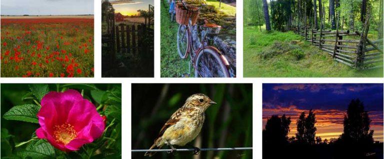 Sommartävlingen: Nu 300 bilder