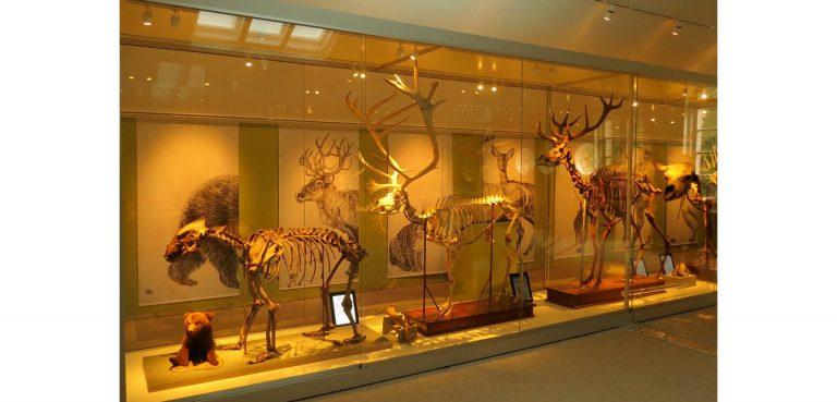 Hur använder forskarna radioaktivt datering för att bestämma åldern på en fossil