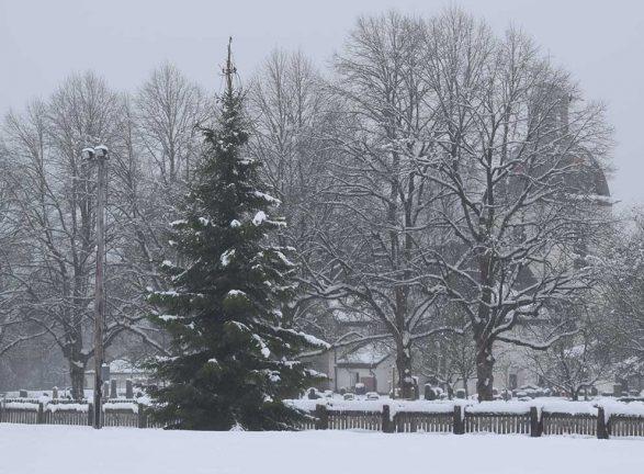 Kommunens vackraste julgran?