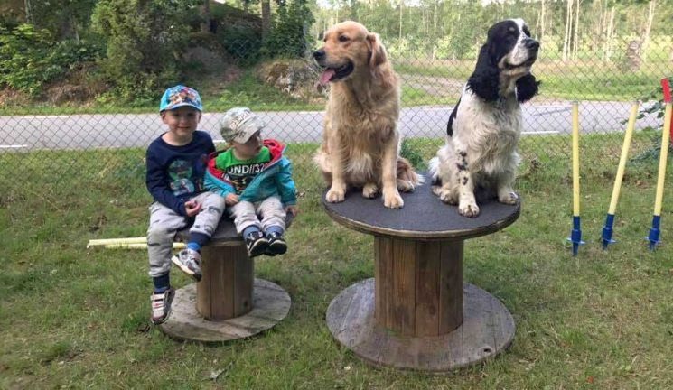 Aktivering i hundfrågan