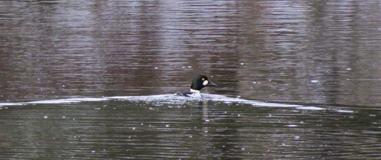 Fågelforsdammen utmed LONA-leden, Natur- och kulturled Skillingaryd