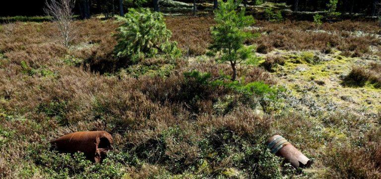 Skillingaryds skjutfält, ljungheden i aprilsol