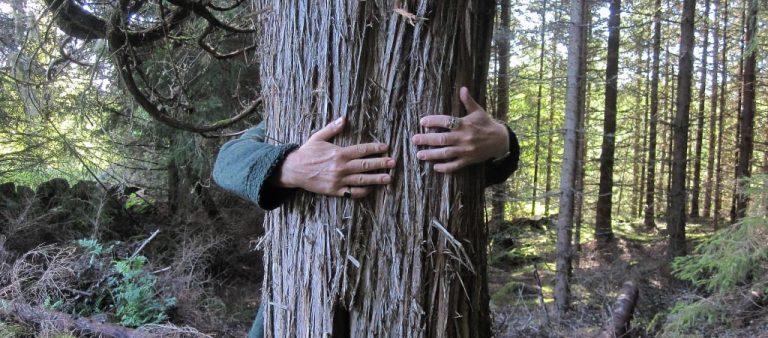 """Världens högsta en, """"Juniperus communis"""", jätte-enen i Ryd"""