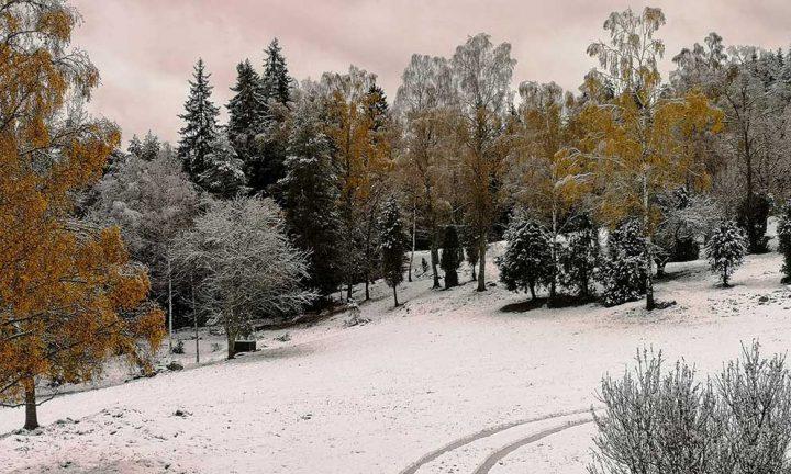 Martinas blogg: Var tog hösten vägen?