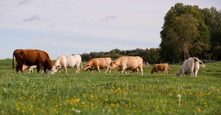 Ekologiskt odlad mark ökar kraftigt