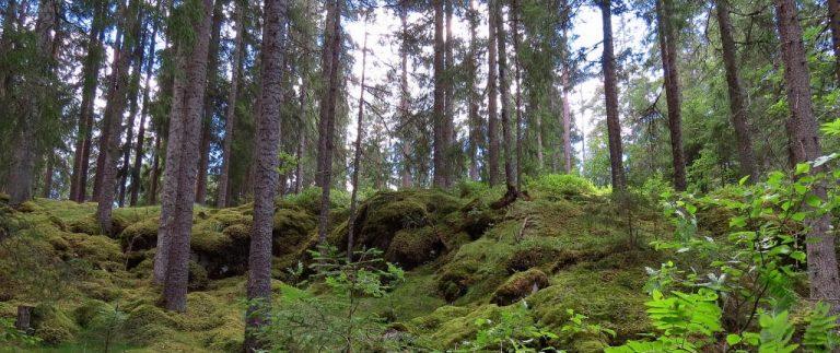 Stensjökvarnskogens naturreservat med fältgentianaängen