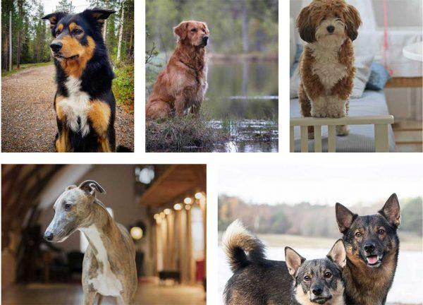Sex hundar blir frimärksmotiv