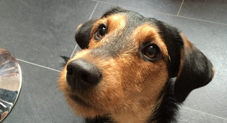 Bildspel från hundens dag del två
